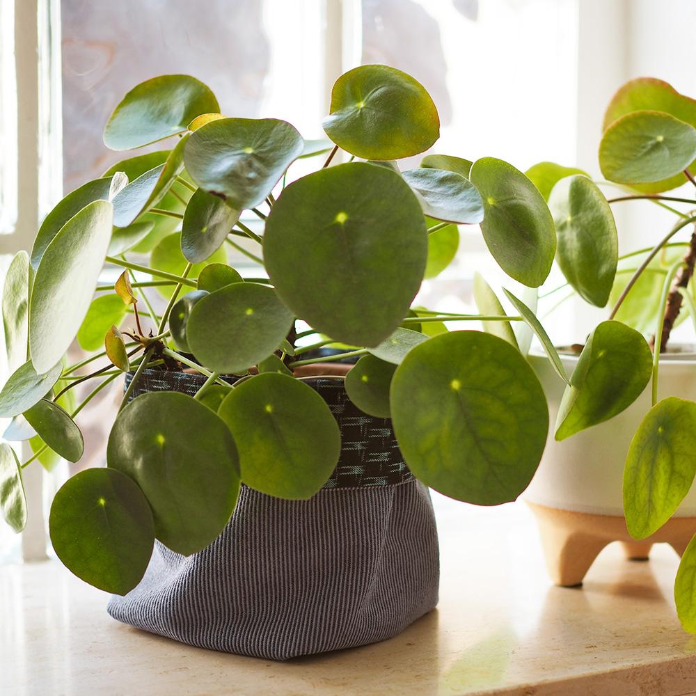 DIY Fabric Plant Bucket Scrap Busting Project