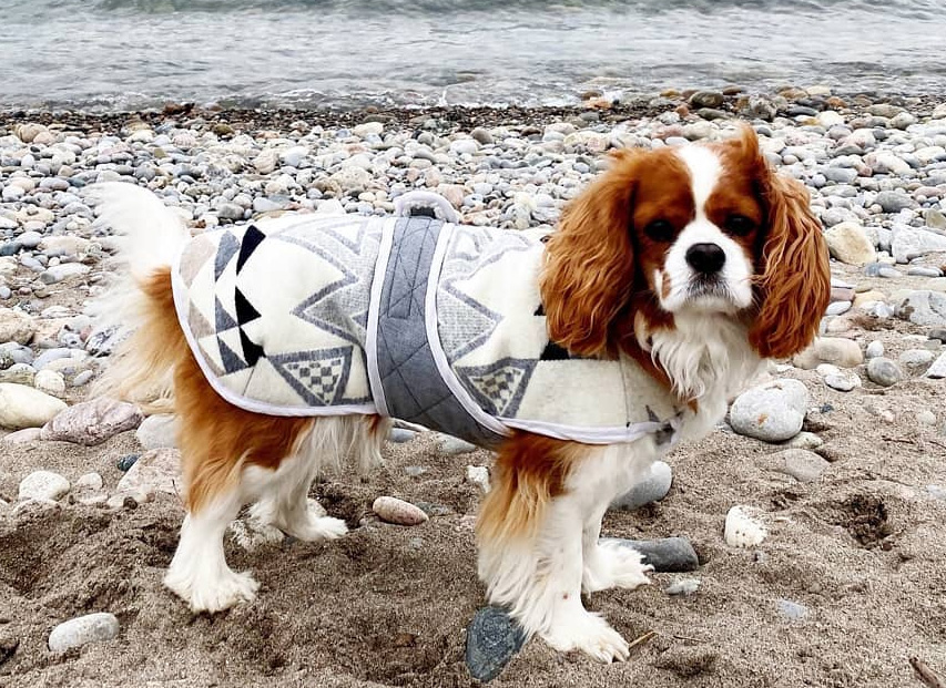 Free Dog Jacket Pattern: Closet Core Dog Coat
